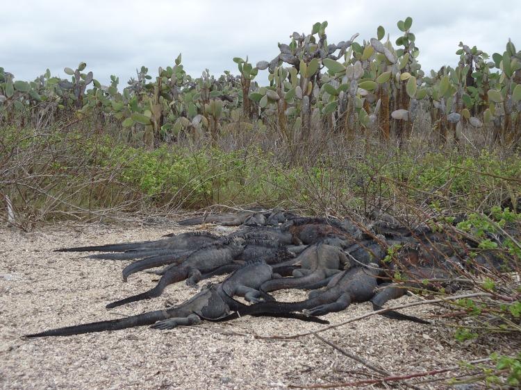 harsh terrain and animals at Galapagos